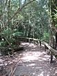 Maits Rest - Walk through rainforest