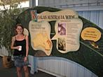 Koala Conservation Centre - Koalas Australia Wide - Where Koalas are found today