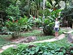 Mahe - Waterfall - Nature like botanical garden on Seychelles