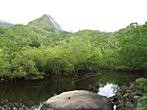 Mahe - Waterfall - Mangrove swamp at Port Glaud